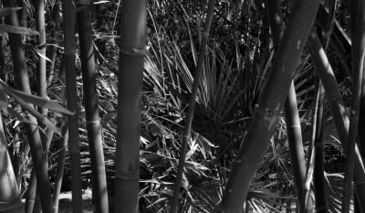 Bamboo - Phoenix Zoo - Alex Berger