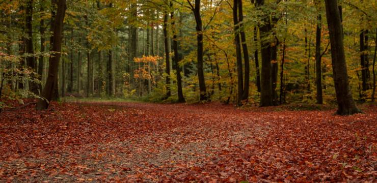 A Road Trip Through Denmark in Fall