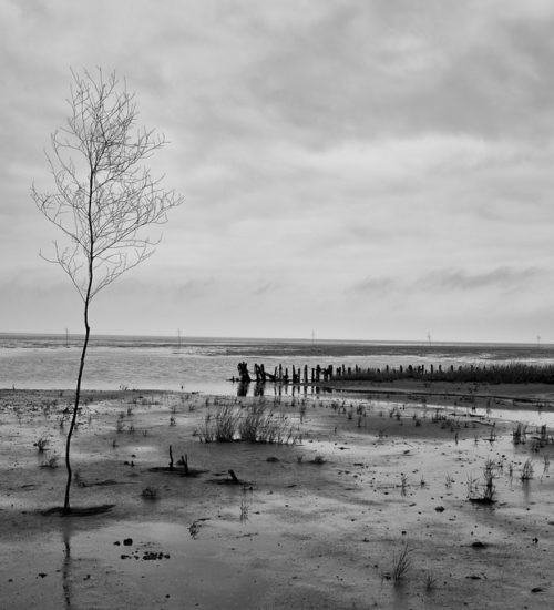 Wadden Sea by Alex Berger