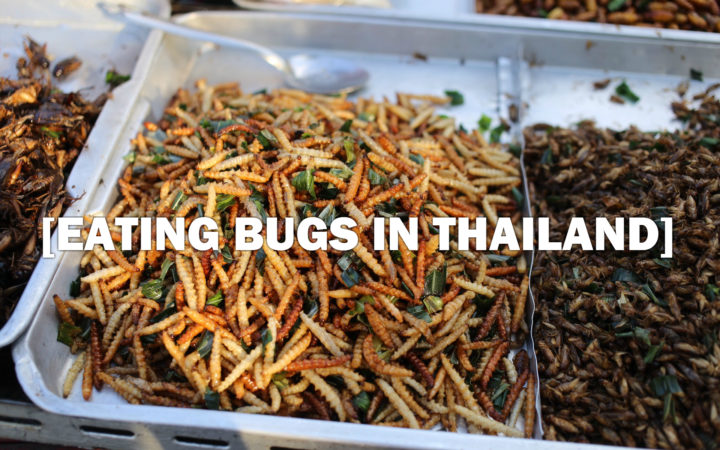 Bugs in Thailand
