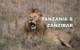 Video Blogging Tanzania's Incredible National Parks and My Safari Experience